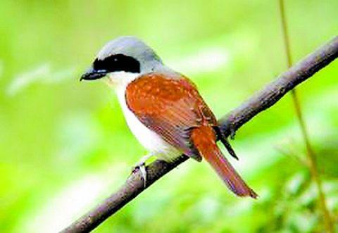 候鸟迁徙大扫描 - 湿地生态资讯 - 水资讯网