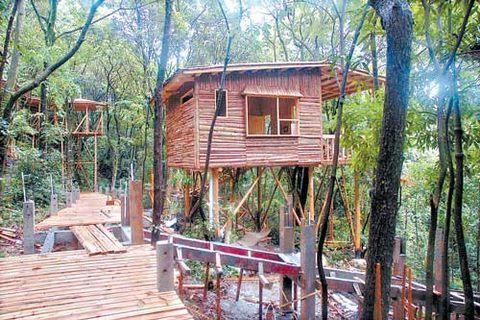 """湿地生态资讯 >> 详细内容  在线投稿  树上建小屋,做个""""原始人"""",的"""