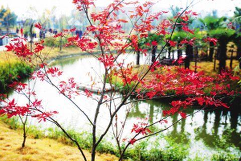 浦东计划整治87条河道