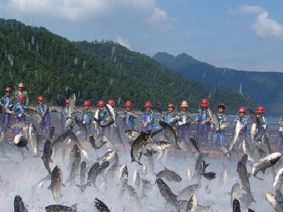 省委副书记夏宝龙考察调研千岛湖渔业