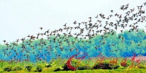 台山一个被红树林保护着的海边村庄,百鸟齐翔,风光旖旎.