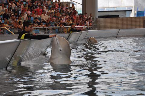 水生野生动物保护科普宣传月活动启动仪式在广州海