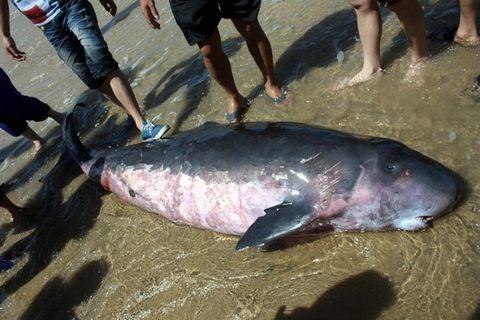 鲨鱼是不是保护动物