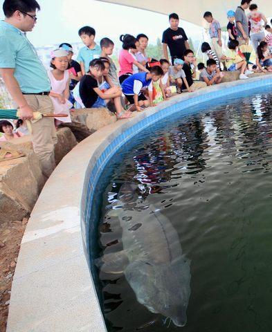 """添彩美丽中国""""水生野生动物保护科普宣传"""